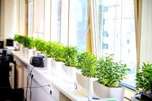 озеленение офиса Киев